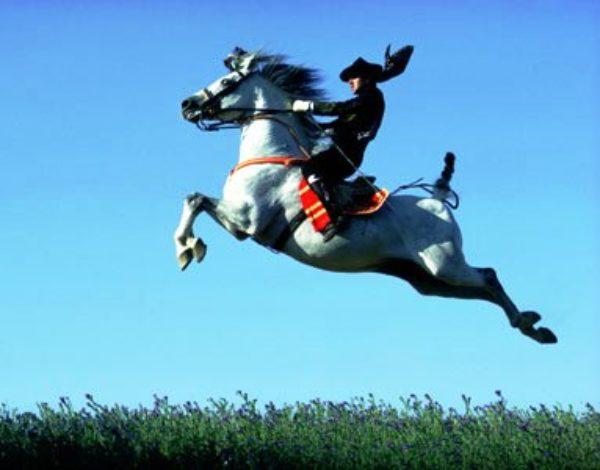 Cavallo andaluso